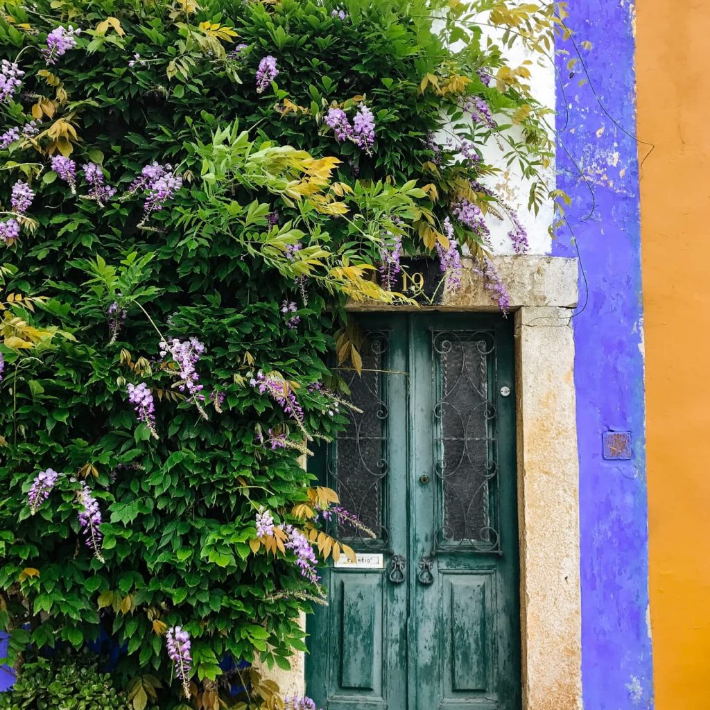 A pretty door with vines in Obidos