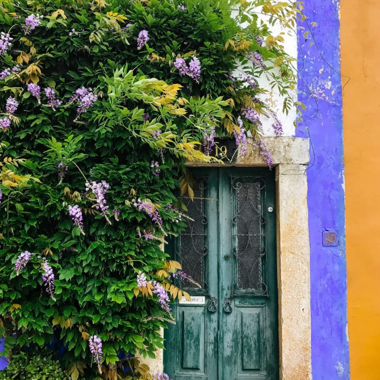 A pretty door with vines in Obidos