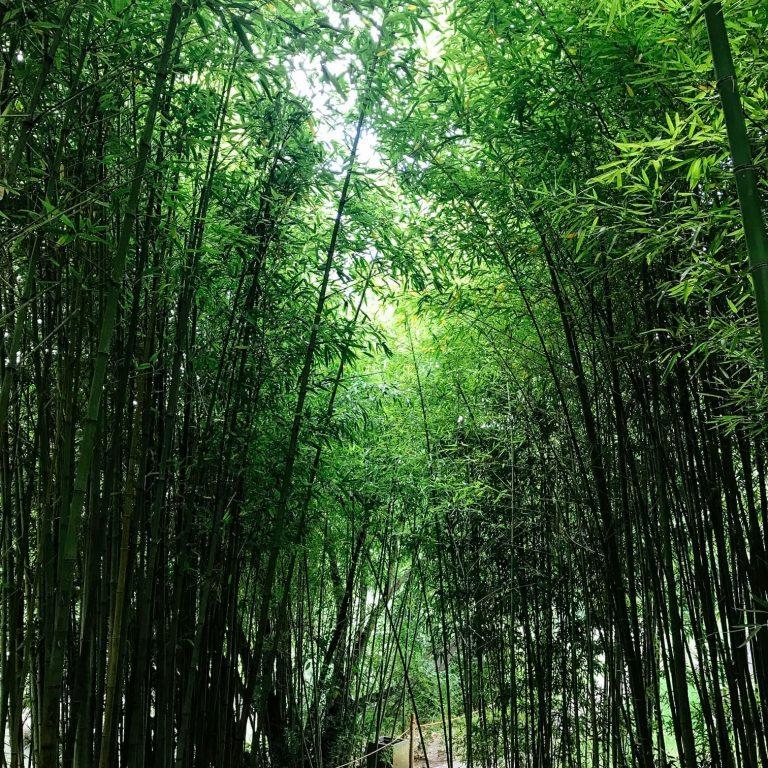 Gulbenkian Gardens - Bamboo pathway