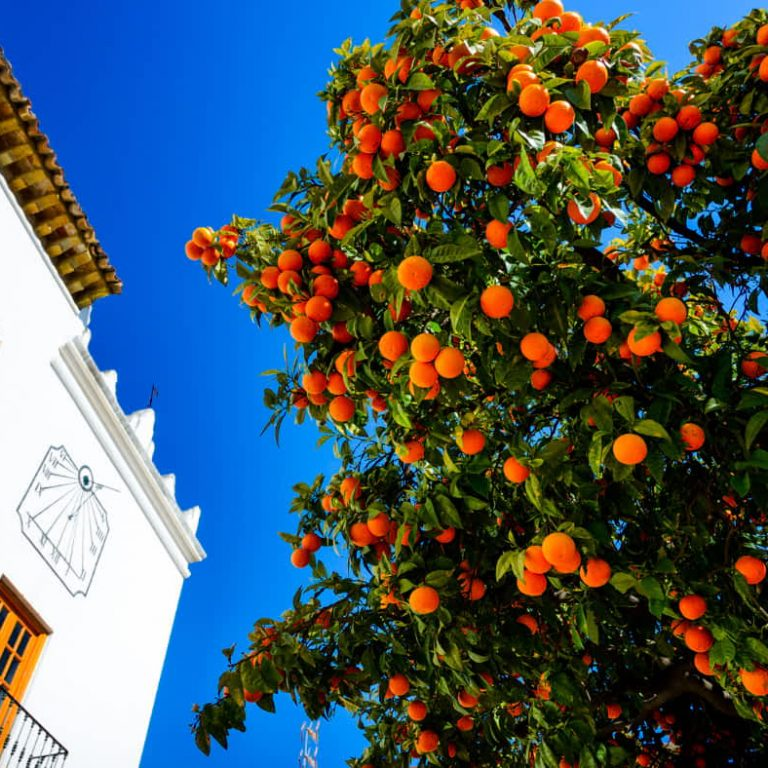 Marbella to Malaga
