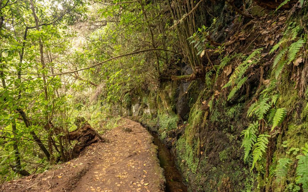Levada do Caldeirão Verde (PR9) - Madeira Levada Walk