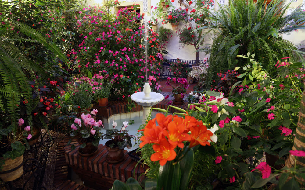 Patios in Cordoba - © Photo by typhoonski from Getty Images by Canva