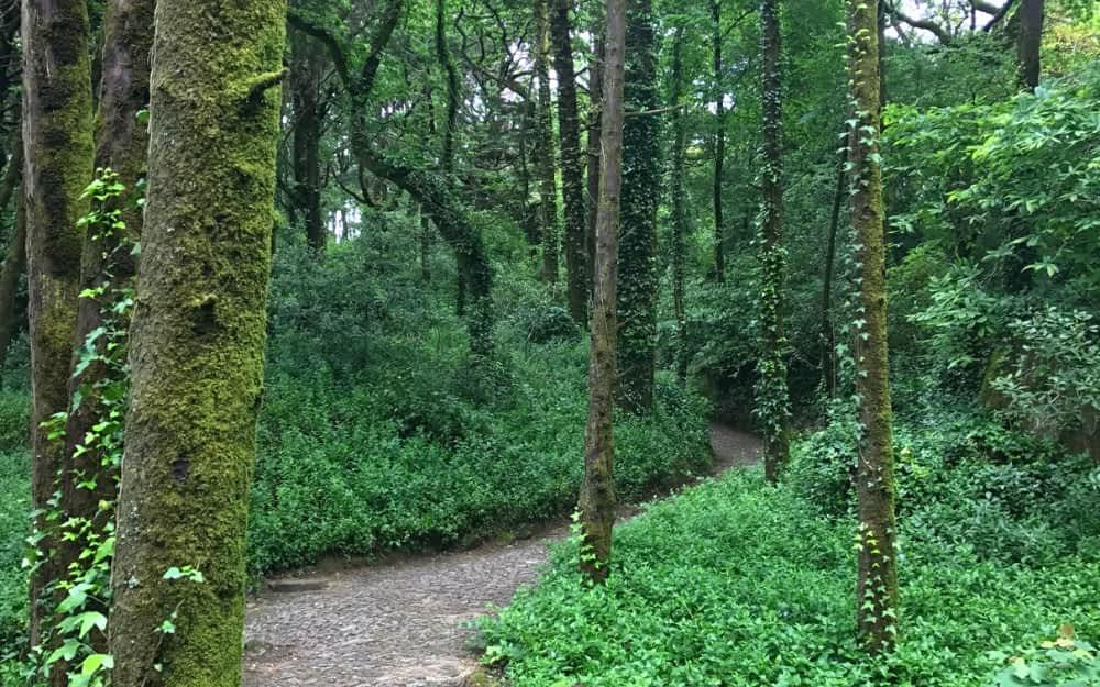 Santa Maria Hiking Trail in Sintra