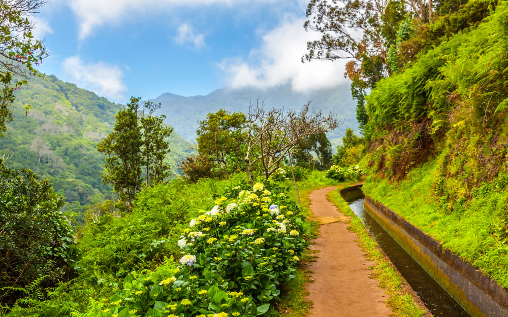 A Levada Walk in Madeira © Photo by aldorado10 by Getty Images by Canva
