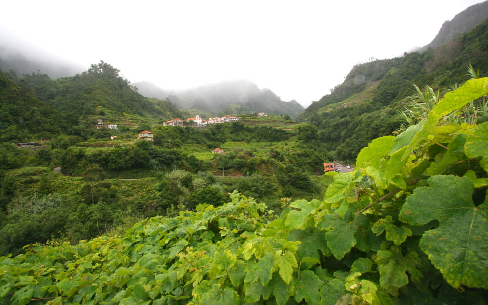 Vineyard in Madeira © Photo by djeecee from Getty Images from Canva